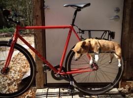 Als je je hond wil meenemen op je fiets, vooral als hij niet zo snel loopt