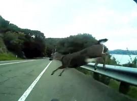 Hert van rechts gaat altijd voor – video