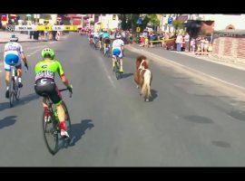 Pony rent ook een stukje mee in Ronde van Polen (video)